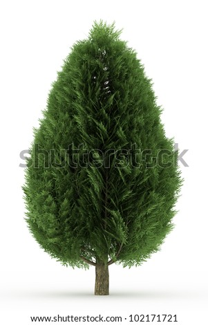 3d Lawson false cypress  tree isolated over white - stock photo