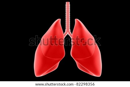3D lungs isolated on dark background
