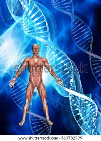3D male figure with muscle map on a medical background with DNA strands - stock photo
