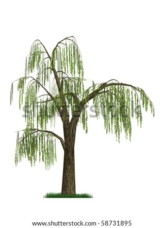 3D model of a weeping willow tree isolated on white background - stock photo