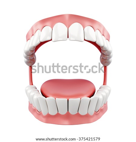 3d model of human jaw on a white background.