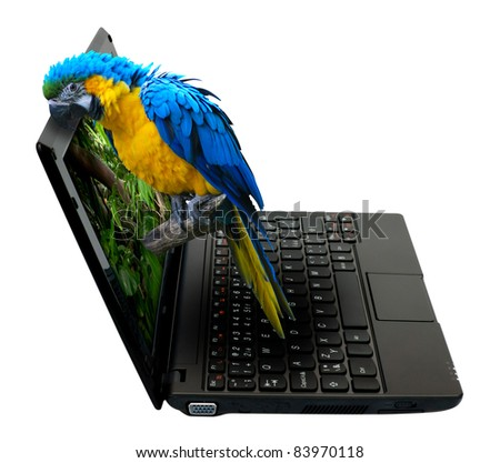 3D Netbook / Notebook With Parrot on the Screen - isolated on White - stock photo