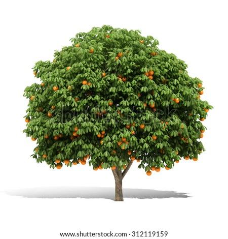 Tangerine incorporated login job