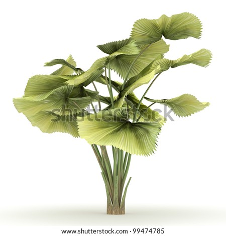 3d  parasol palm isolated over white - stock photo
