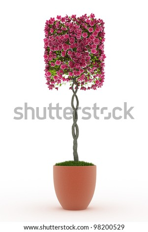 3d render bonsai Peach blossom isolated on white