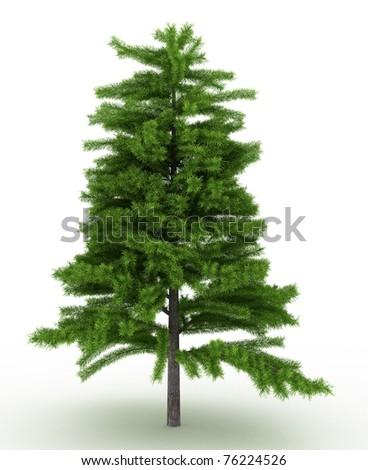 3d render cedrus deodara tree isolated over white - stock photo