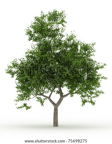 3d render common tree isolated over white