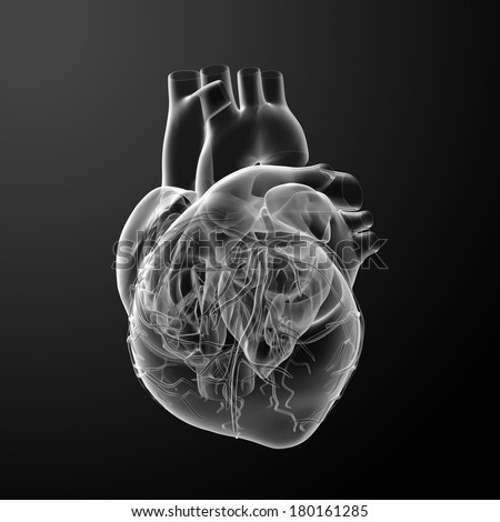 3d render Heart  - back view - stock photo