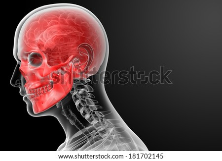 3d render human skull anatomy - side view - stock photo