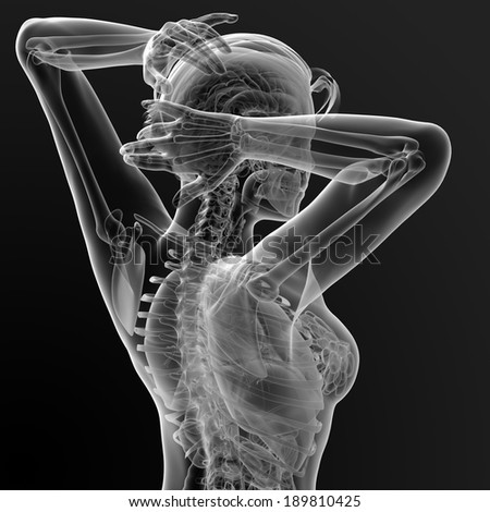 3d render illustration of the female anatomy - back view - stock photo