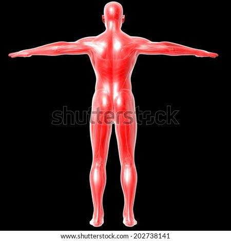 3d render illustration of the human anatomy - stock photo