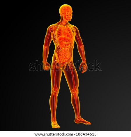 3d render male anatomy - front view - stock photo