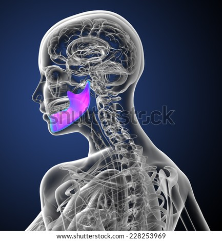 3d render medical illustration of the jaw bone - side view - stock photo