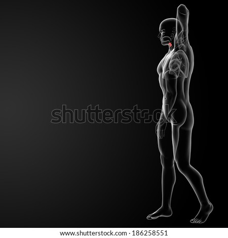 3d render medical illustration of the male larynx -side view - stock photo