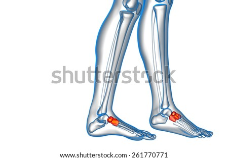 3d render medical illustration of the midfoot bone - side view