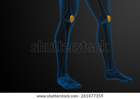 3d render medical illustration of the patella bone - side view