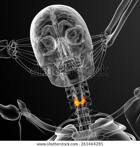 3d render medical illustration of the thyroid gland - front view - stock photo