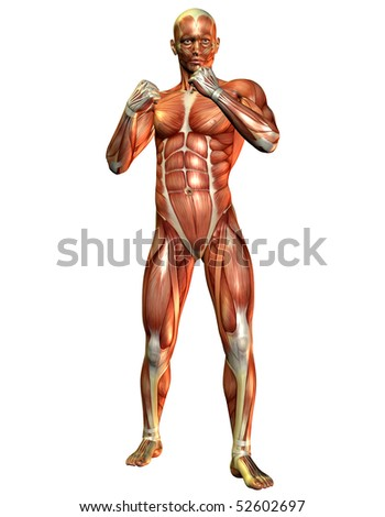3D Render muscle study of a fighting man - stock photo