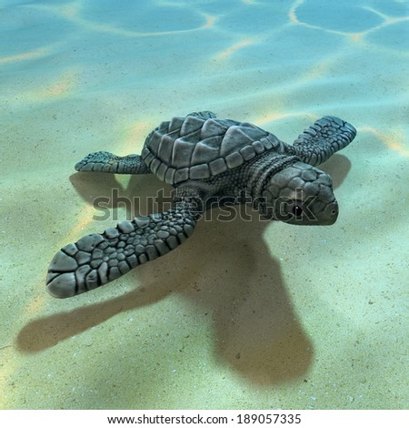 3d render of a baby sea turtle - stock photo