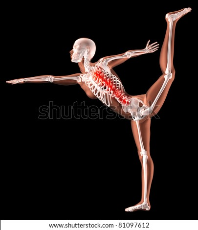 3D render of a female medical skeleton in a yoga position with spine highlighted - stock photo