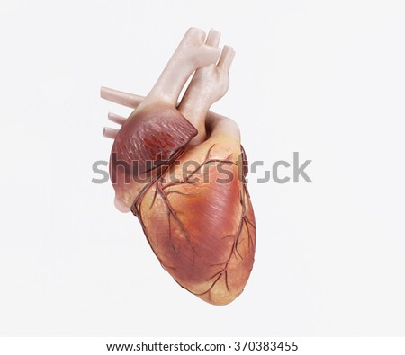 3D Render of a healthy Human Heart - stock photo