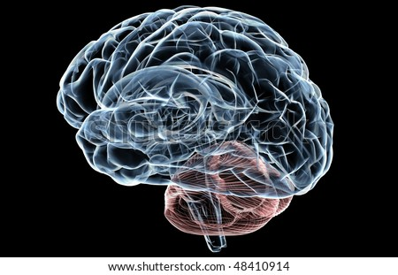 3D render of a human brain X-ray. - stock photo