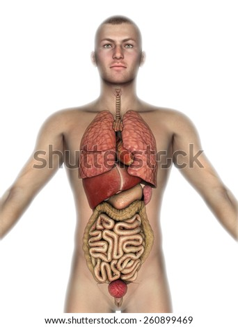 3D render of a male figure with internal organs exposed - stock photo