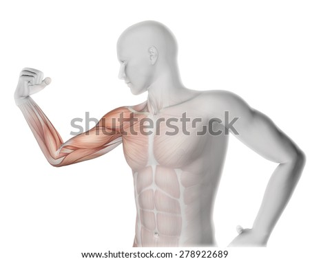 3D render of a male medical figure flexing arm with partial muscle map - stock photo
