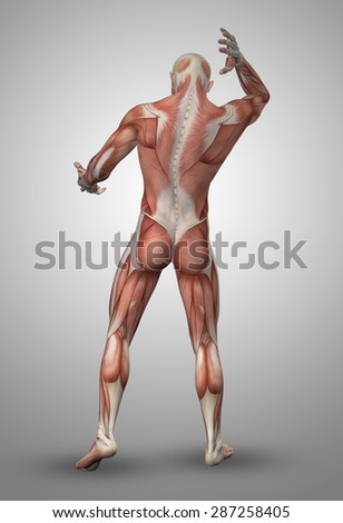 3D render of a male medical figure with muscle map