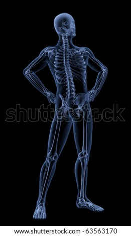 3D render of a male medical skeleton in a standing pose - stock photo