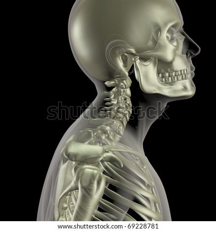neck bones stock images, royalty-free images & vectors | shutterstock, Human body