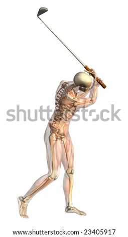 3D render of a male skeleton with semi-transparent muscles taking a golf swing. - stock photo