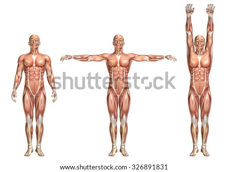 3D render of a medical figure showing shoulder abduction and adduction