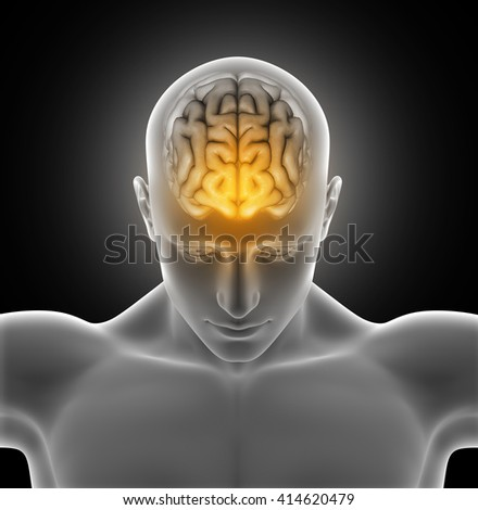 3D render of a medical image of a male figure with brain highlighted - stock photo