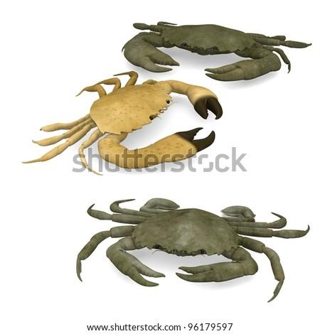 3d render of crustacean animals-crabs - stock photo