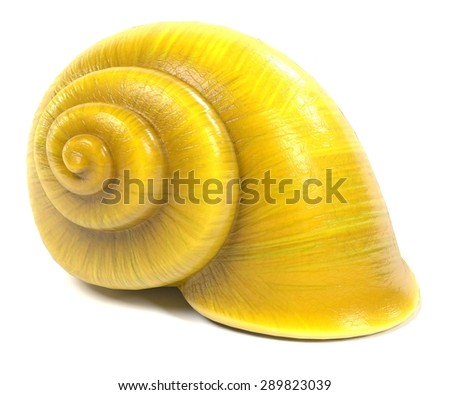 3d render of snail shell - stock photo