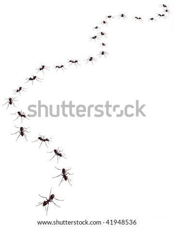 3d render of the ant on the plain background