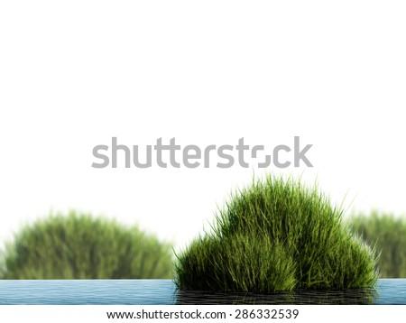 3d render water plants  - stock photo
