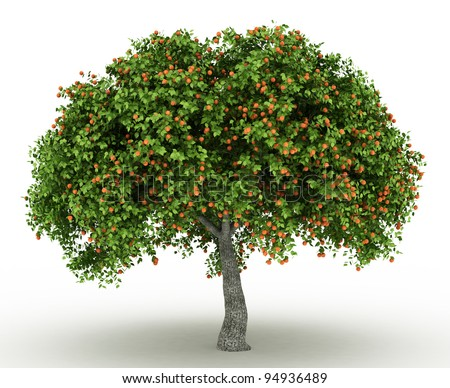 3d Rendered apricot tree full of apricots  isolated over white - stock photo