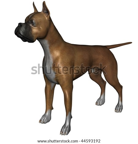 3D rendered boxer dog on white background isolated