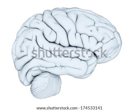 3d rendered illustration - human brain - stock photo