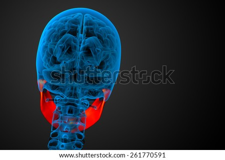 3d rendered illustration - jaw bone - back view - stock photo