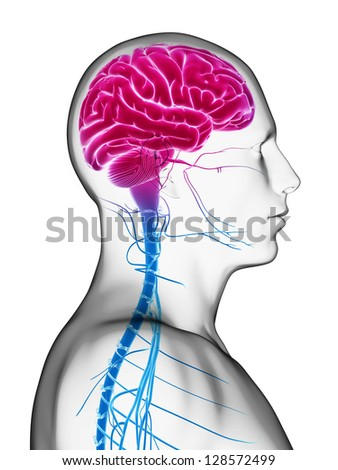3d rendered illustration - male brain - stock photo
