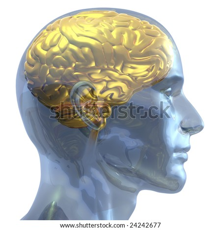 3D rendered illustration of a transparent crystal human head with brain made out of gold shown inside - stock photo