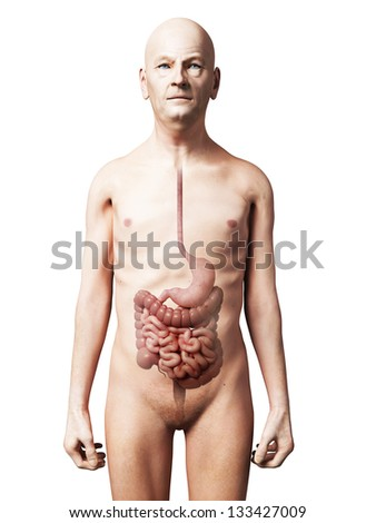3d rendered illustration of an old man - digestive system