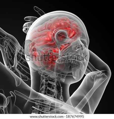 3d rendered illustration of the female brain - bottom view - stock photo