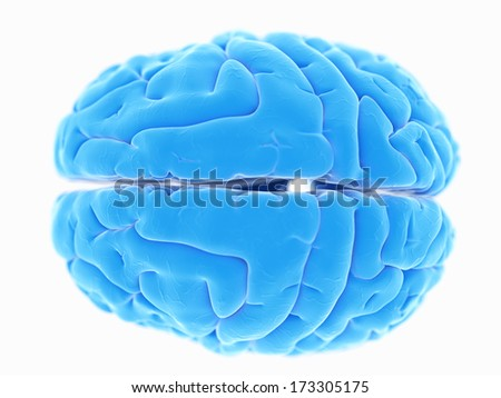 3d rendered illustration of the human brain anatomy - stock photo