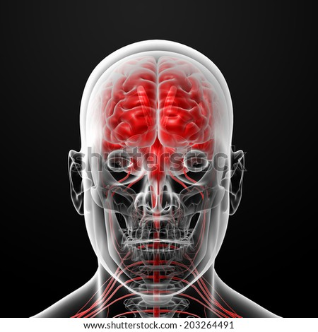 3d rendered illustration of the male brain - front view - stock photo
