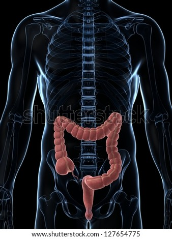 3d rendered illustration of the male colon