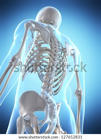 3d rendered illustration of the male skeleton - stock photo